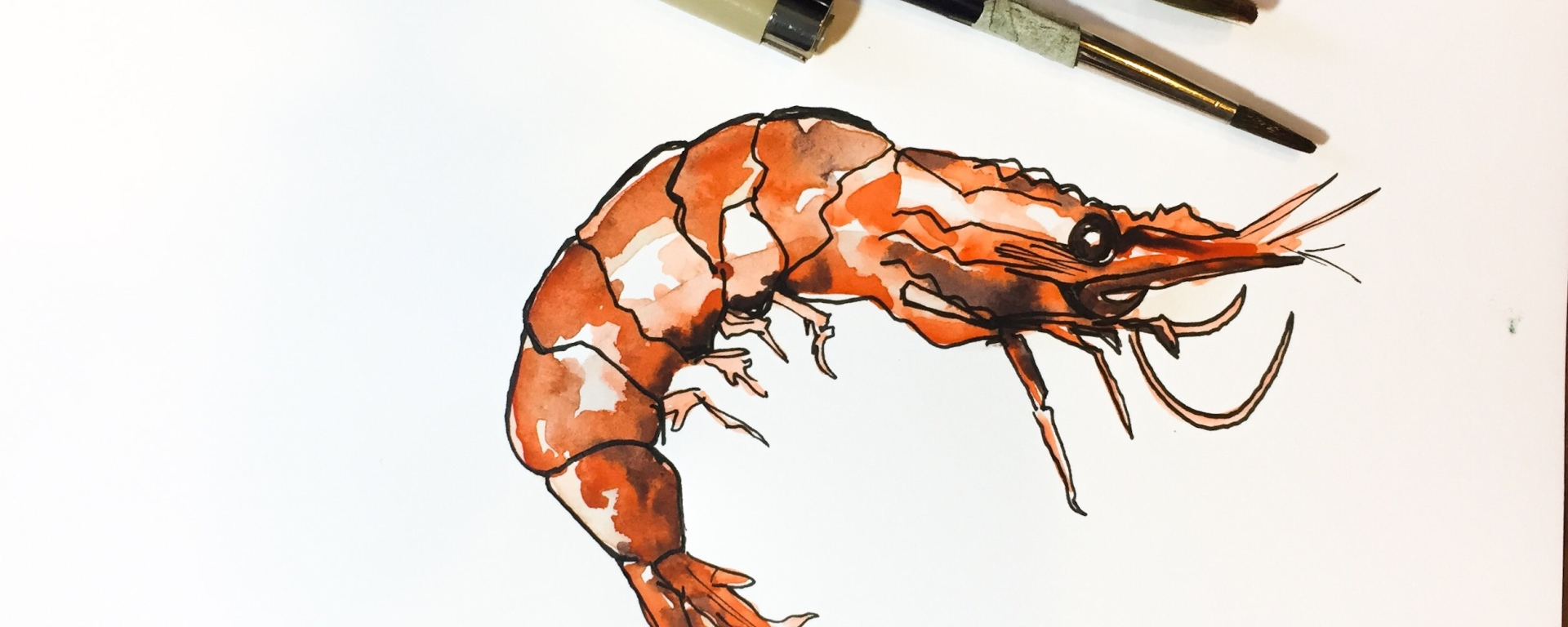 Learn how to a vibrant shrimp using simple layers of colors with this watercolor time lapse tutorial!