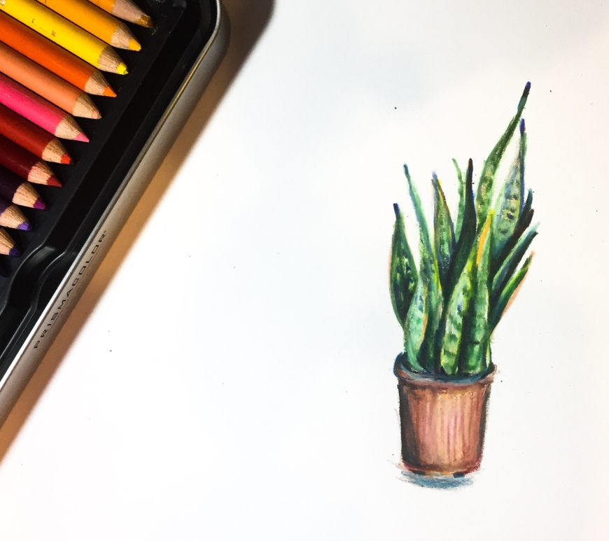 Learn how to blend colored pencils to create a vibrant house plant drawing!