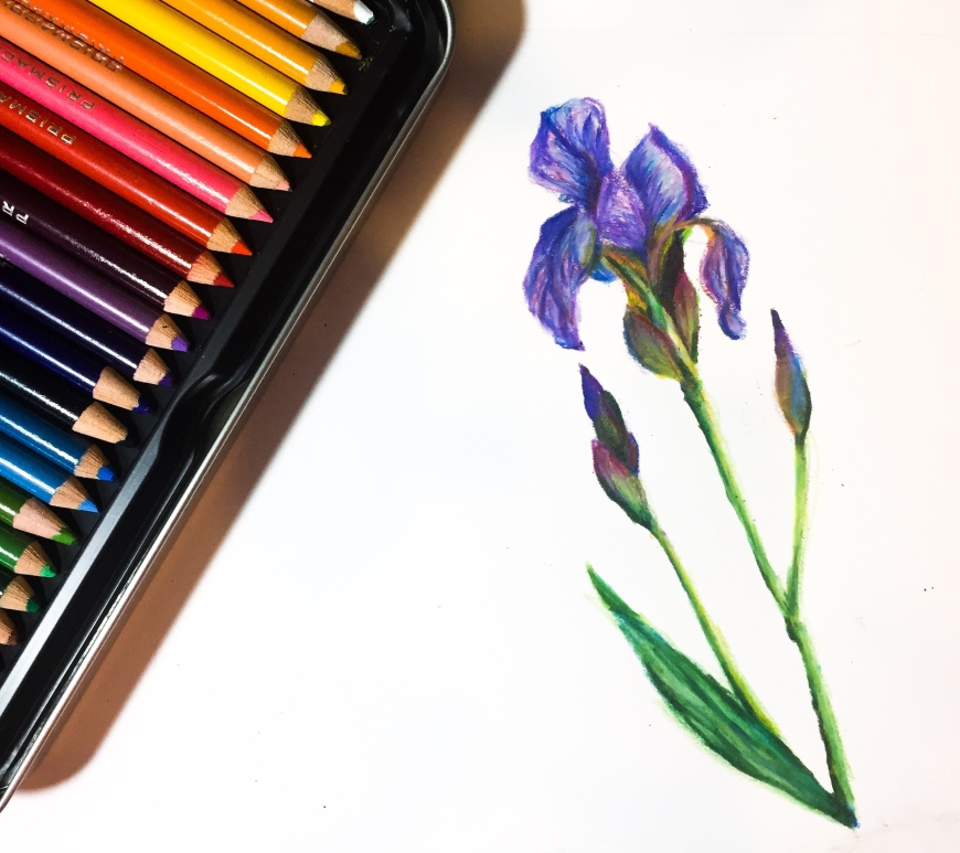 Learn how to blend colored pencils to create a vibrant iris drawing!