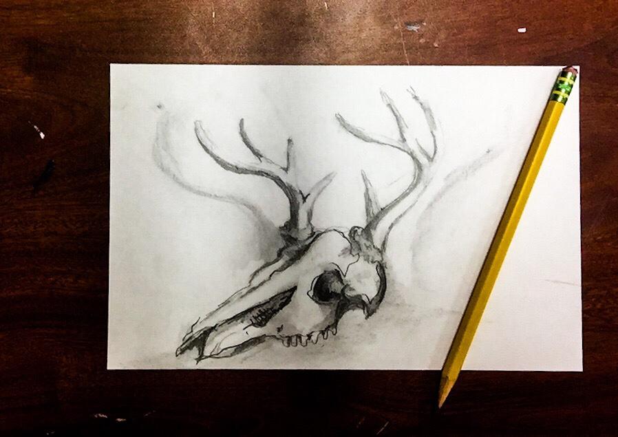 Daily Doodle Deer Skull Drawing That Art Teacher