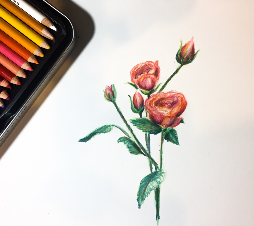 Learn how to use colored pencils to create a drawing of blooming roses!