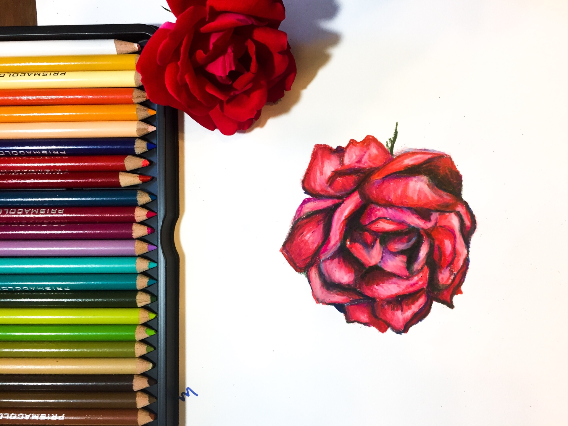 Rose Drawing   How to Use Colored Pencils to Draw a Rose